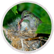 Broad-billed Hummingbird And Young Round Beach Towel
