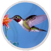 Broad-tailed Hummingbird Round Beach Towel