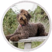 Brown Labradoodle Round Beach Towel