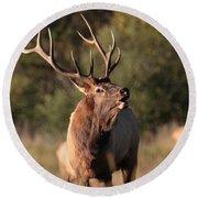 Bugling Bull Elk Round Beach Towel