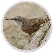 Canyon Wren Round Beach Towel