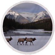 Elk Crossing, Banff National Park, Alberta Round Beach Towel