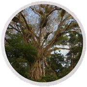 Cathedral Fig Tree Round Beach Towel