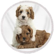 Cavapoo Puppies Hugging Round Beach Towel
