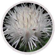 Centaurea Named The Bride Round Beach Towel