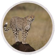 Cheetah On Termite Mound Round Beach Towel