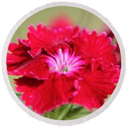Cherry Dianthus From The Floral Lace Mix Round Beach Towel