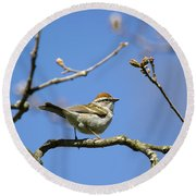 Chipping Sparrow Perched In A Tree Round Beach Towel