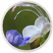 Clerodendrum Ugandense Or Blue Butterfly Bush Round Beach Towel