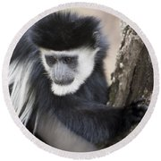 Colobus Monkey Round Beach Towel