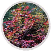 Colorful Leaves On A Tree Round Beach Towel