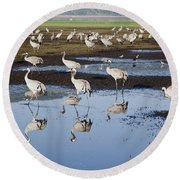 Common Crane Grus Grus Round Beach Towel