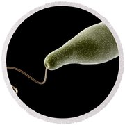 Conceptual Image Of Euglena Round Beach Towel by Stocktrek Images