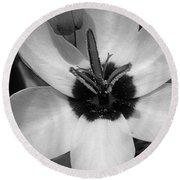 Corn Lily Named Giant Round Beach Towel