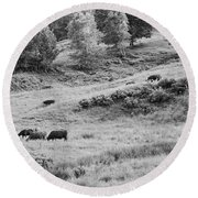 Cows Grazing In Field Rockport Maine Round Beach Towel
