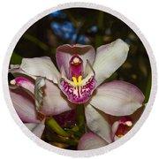 Cymbidium Orchid Round Beach Towel