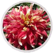 Dahlia Named Bodacious Round Beach Towel