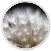 Dandelion Backlit Close Up Round Beach Towel
