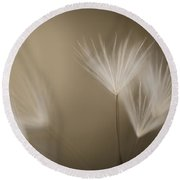 Dandelion Close-up View Backlit Round Beach Towel