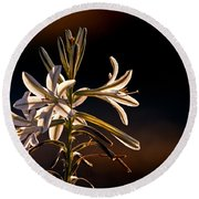 Desert Easter Lily Round Beach Towel by Robert Bales