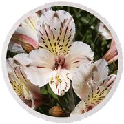 Desert Willow Round Beach Towel