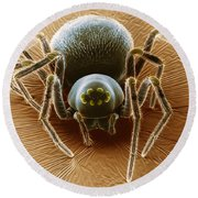 Dictynid Spider Round Beach Towel by David M. Phillips