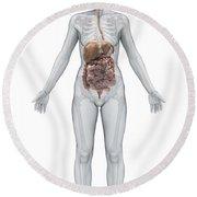 Digestive System Female Round Beach Towel