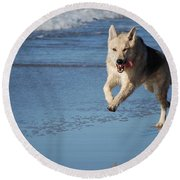 Dog On Beach Round Beach Towel