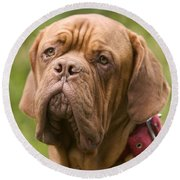 Dogue De Bordeaux Round Beach Towel