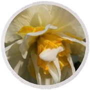 Double Daffodil Named White Lion Round Beach Towel