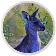 Eastern Grey Kangaroo Round Beach Towel