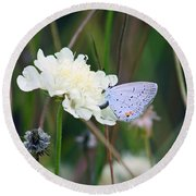 Eastern Tailed Blue Butterfly On Pincushion Flower Round Beach Towel