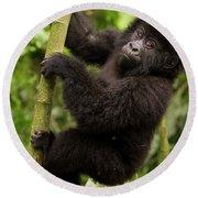Endangered Mountain Gorillas Habitate Round Beach Towel