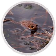 European Common Brown Frog Round Beach Towel