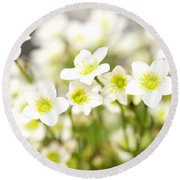 Field Of White Blossoms Round Beach Towel