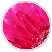 Gerbera Daisy Named Raspberry Picobello Round Beach Towel