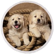 Golden Retriever Puppies Round Beach Towel