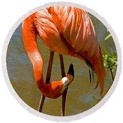 Greater Flamingo Round Beach Towel