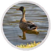 Green Winged Teal Round Beach Towel