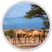 Group Of Camels In Africa Round Beach Towel
