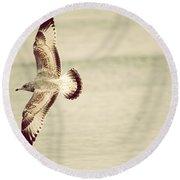 Herring Gull In Flight Round Beach Towel by Karol Livote