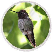 Hummingbird Hangout Round Beach Towel