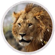 Large Male Lion Emerging From The Bush Round Beach Towel