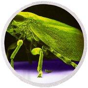 Leafhopper, Sem Round Beach Towel by David M. Phillips