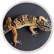 Leopard Gecko Eublepharis Macularius Round Beach Towel