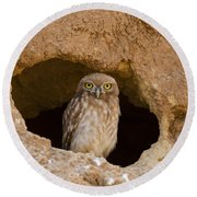 Little Owl Athene Noctua Round Beach Towel