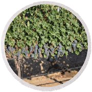 Lorimar Grapes Round Beach Towel