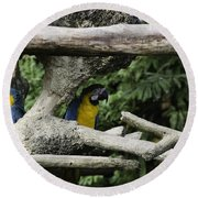 2 Macaws Framed By Tree Branches Inside The Jurong Bird Park Round Beach Towel