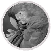 Macaws Of Color B W 17 Round Beach Towel