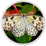 Malabar Tree Nymph Butterfly Round Beach Towel